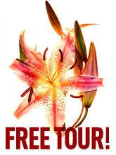 Mosterotic Free Tour